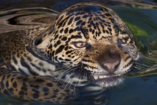 Water Surface Tension