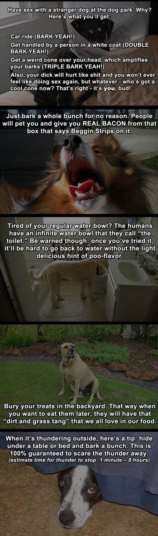 funny-life-hack-dog-ball-owner-toilet
