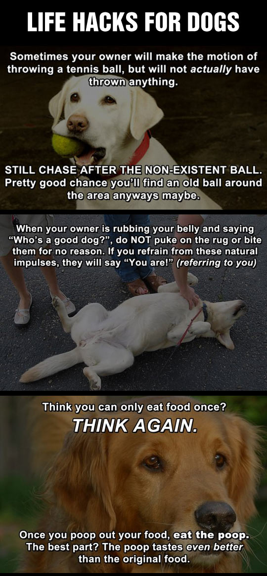 funny-life-hack-dog-ball-owner