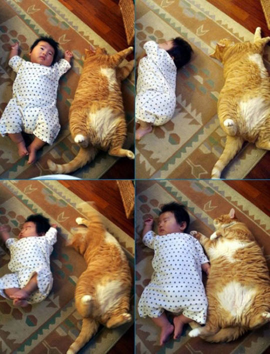 funny-little-baby-fat-cat