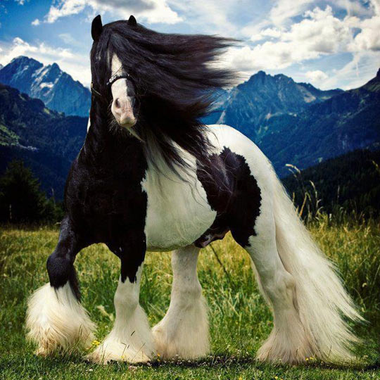 funny-long-hair-horse-field
