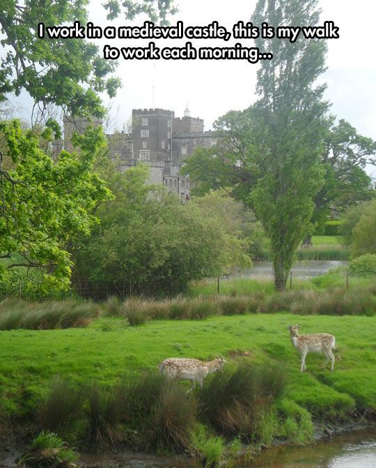 funny-medieval-castle-morning-walk