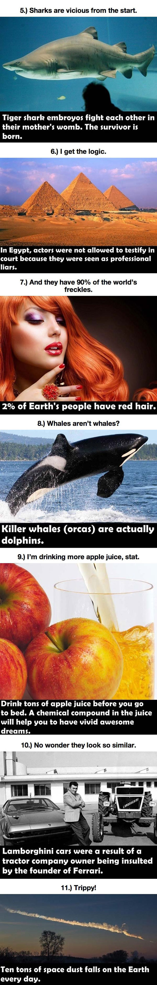 funny-mind-blowing-facts-number-shark