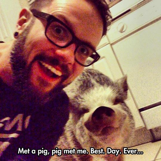 funny-pig-selfie-hipster-glasses