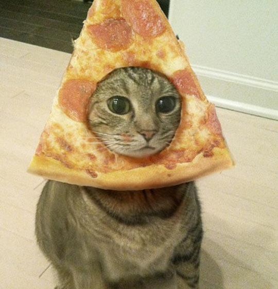 Magnificent Pizza Cat