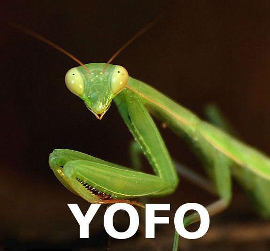 funny-praying-mantis-YOLO