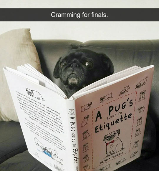 Finals Are Hard On Everyone