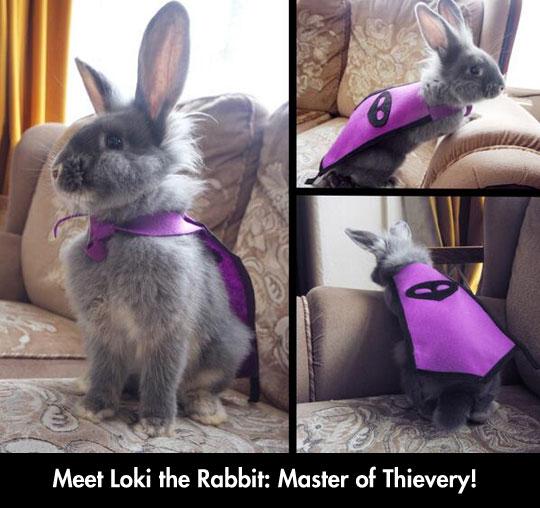 funny-rabbit-magic-cape-cute