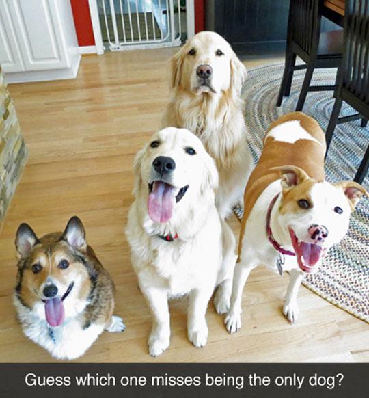 funny-sad-big-old-dog-alone