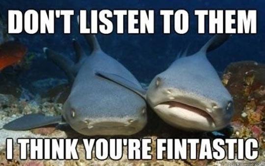 funny-shark-friends-sad-ocean