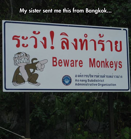 Beware Monkeys