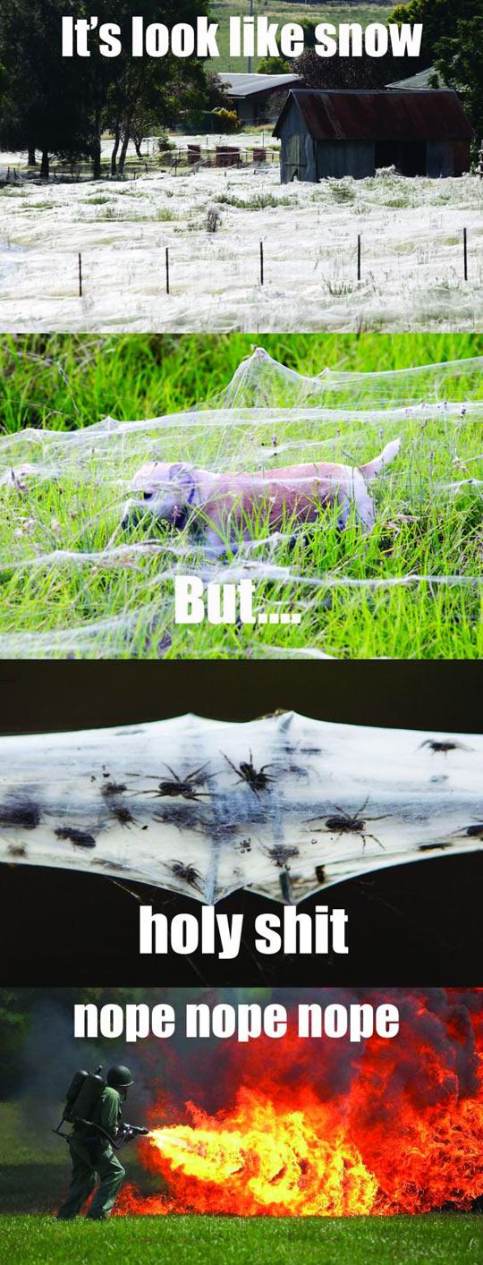 funny-spider-web-dog-farm-1