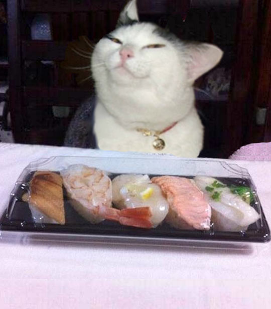 funny-sushi-cat-food-table