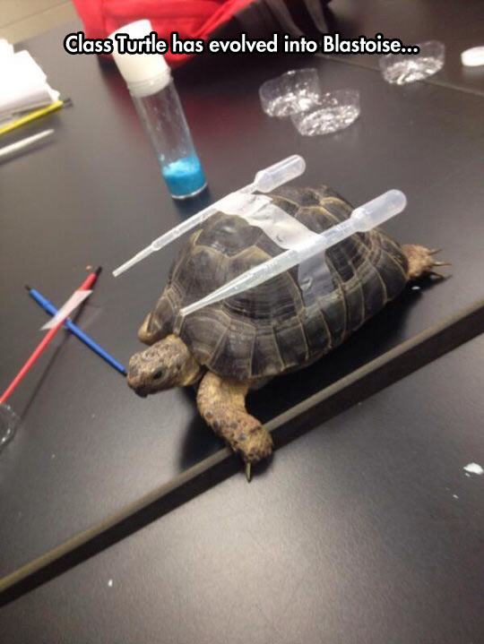 Tortoise Evolution