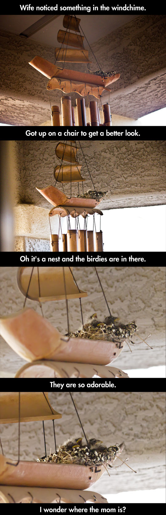 funny-wind-chime-nest-birds-home