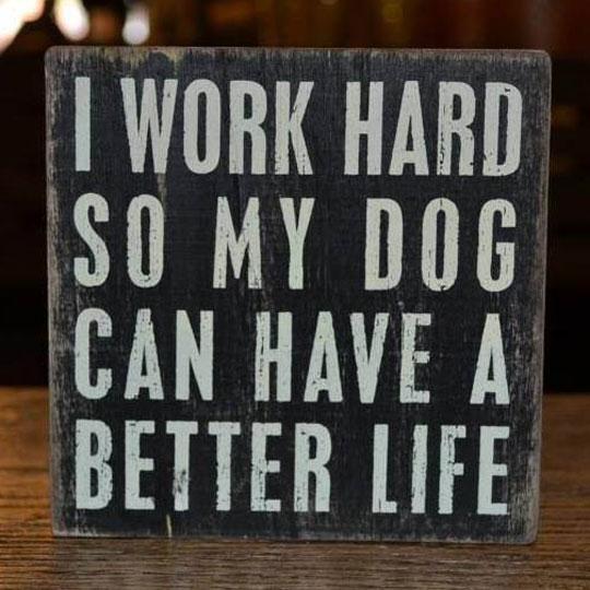 My Career In a Nutshell