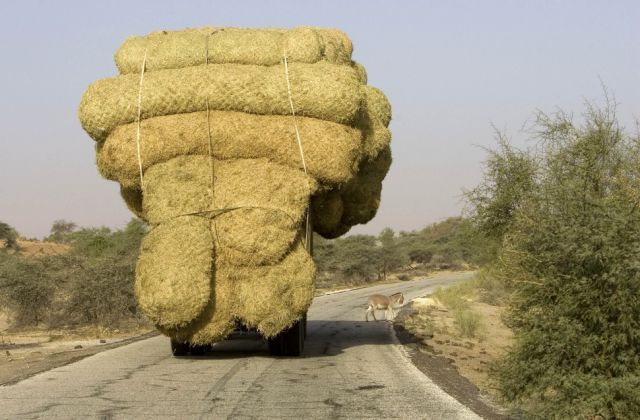 odd_cargo_in_extreme_transportation_situations_640_09