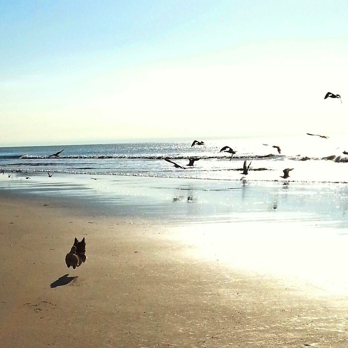 My dog's first beach experience. Seagulls are the new squirrels.