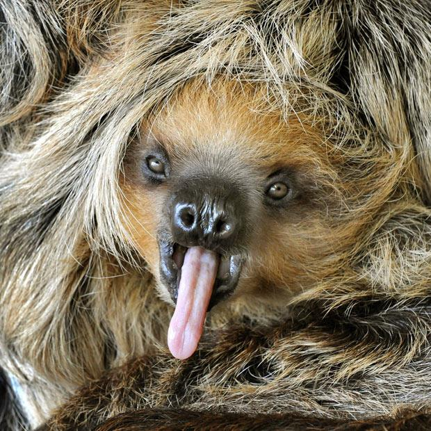 animals-that-look-like-miley-cyrus-10