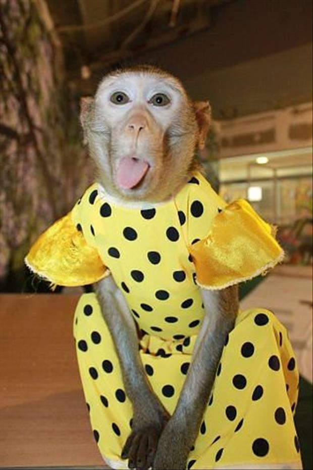 animals-that-look-like-miley-cyrus-9