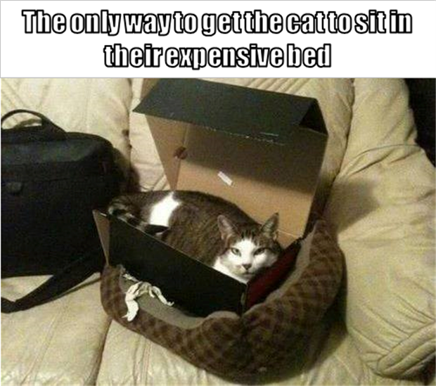 cats-love-boxes-1