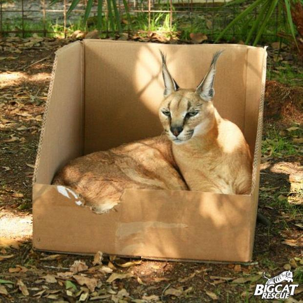 cats-love-boxes-11