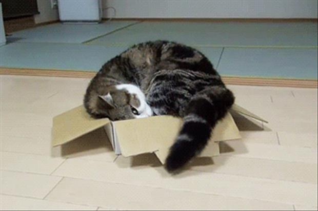 cats-love-boxes-14