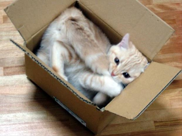 cats-love-boxes-15