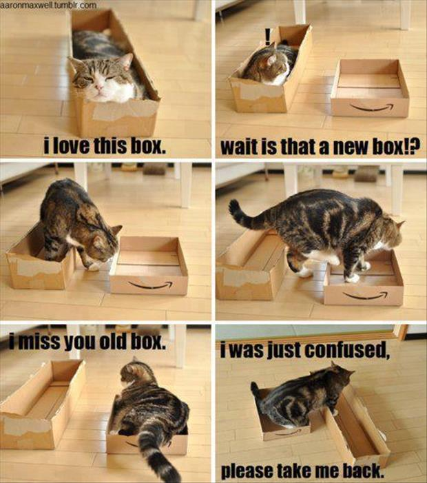 cats-love-boxes-16