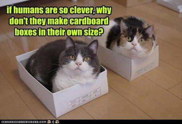 cats-love-boxes-17