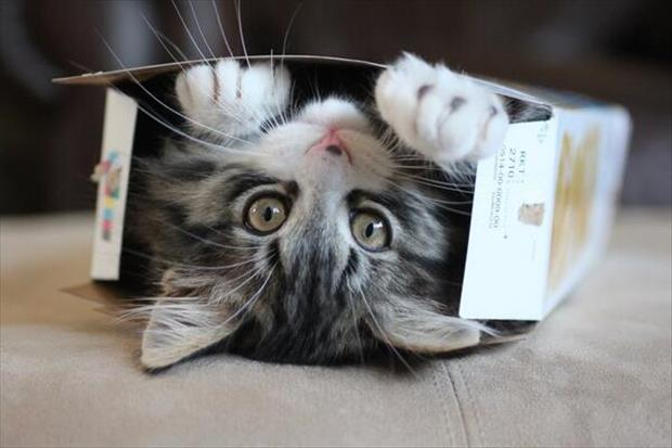 cats-love-boxes-18