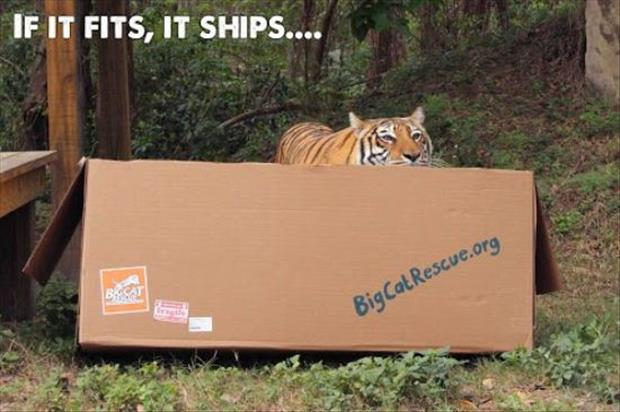 cats-love-boxes-20