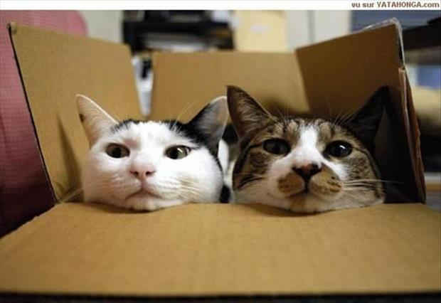 cats-love-boxes-23