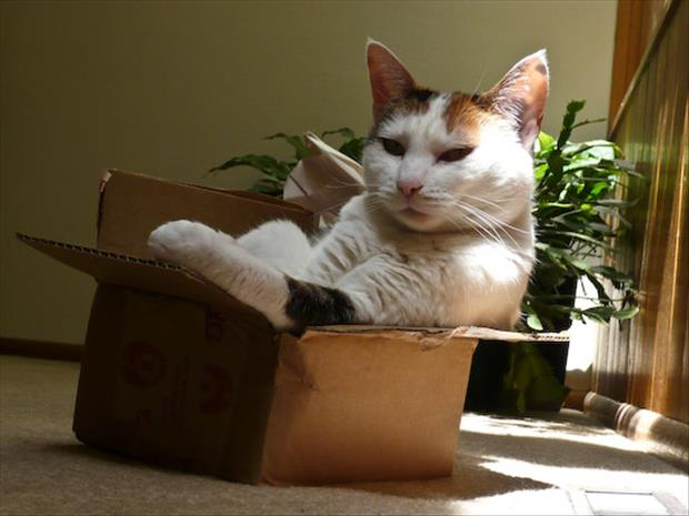 cats-love-boxes-24