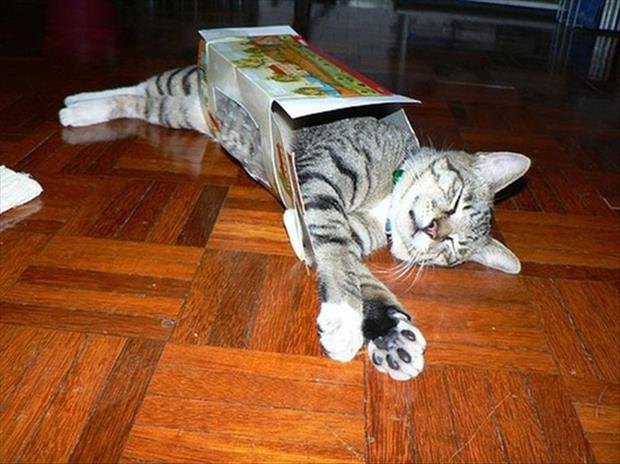 cats-love-boxes-25