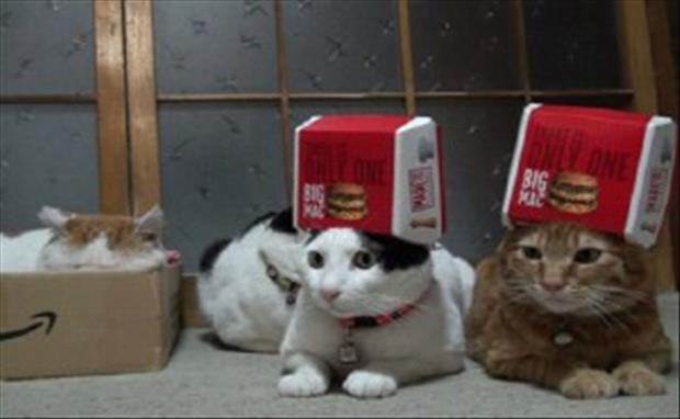 cats-love-boxes-3