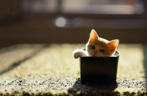 cats-love-boxes-5