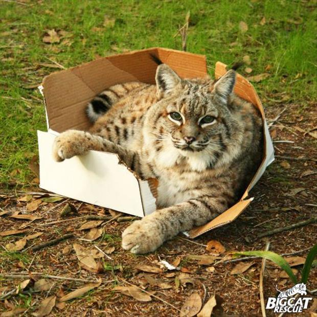 cats-love-boxes-6