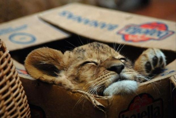 cats-love-boxes-7