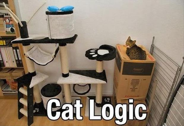 cats-love-boxes-8