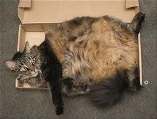 cats-love-boxes-9