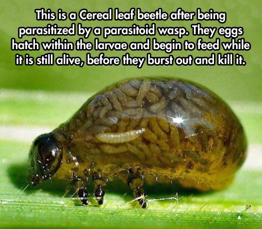 cool-bug-parasite-leaf-inside