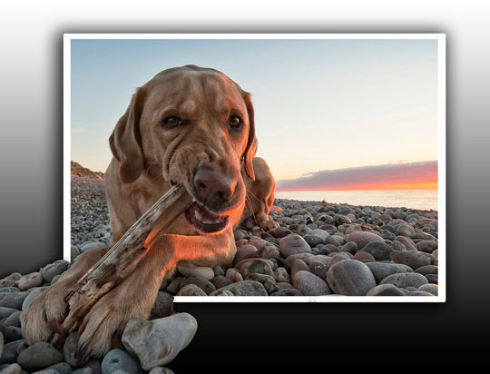cool-dog-out-picture-beach-biting-stick