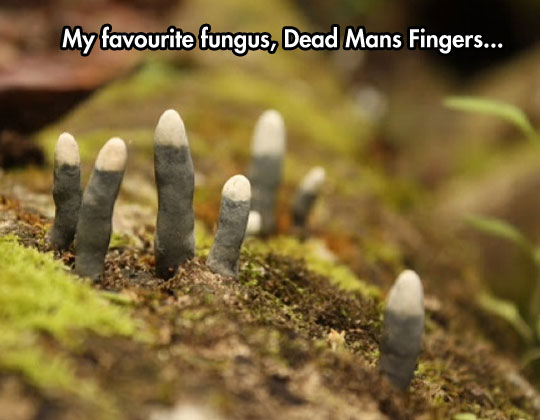The Coolest Fungus