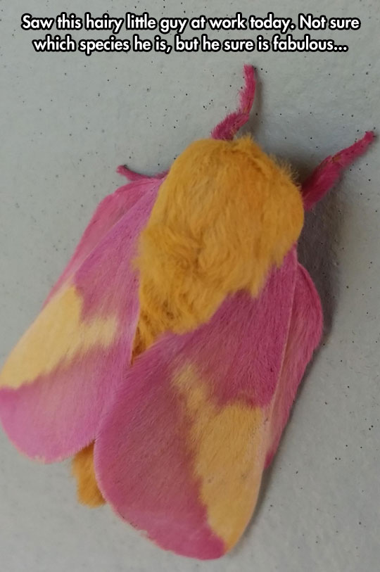 cool-hairy-bug-colorful-moth