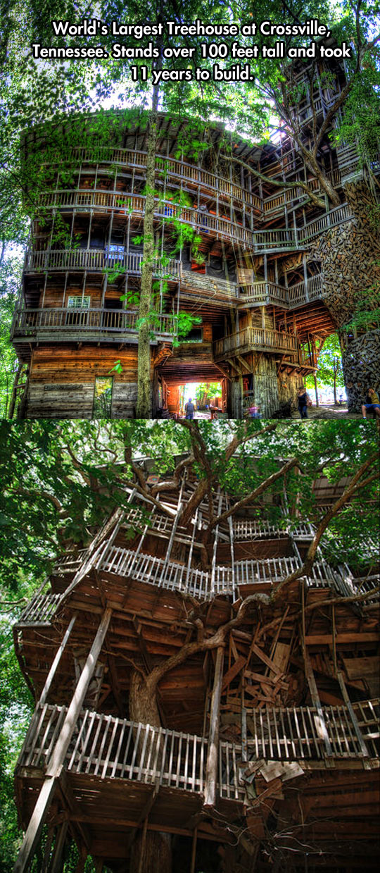 cool-largest-tree-house-Tennessee
