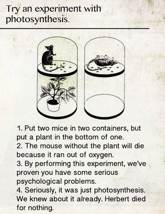 cool-mouse-experiment-plant-oxygen