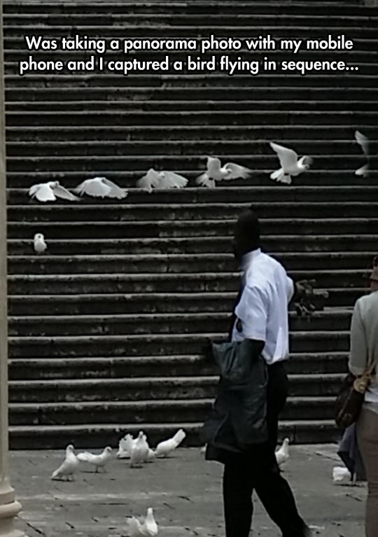 A Bird Flying Sequence