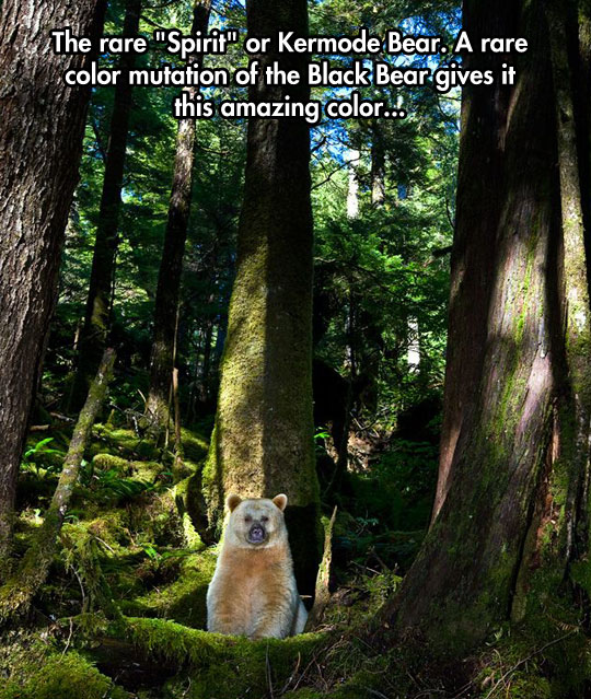 cool-white-bear-spirit-forest