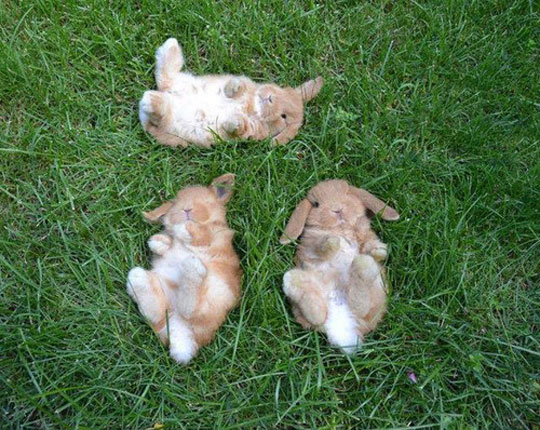 Three Baby Bunnies Watching The Sky
